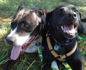 Animal Healings - Dogs